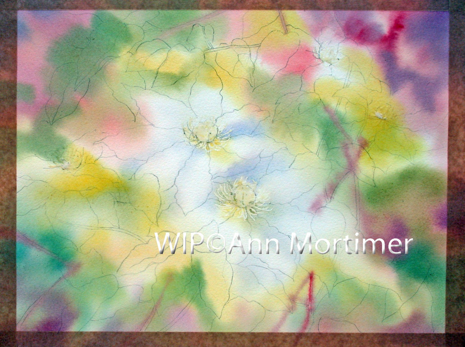 Clematis…first stages – Ann Mortimer Art