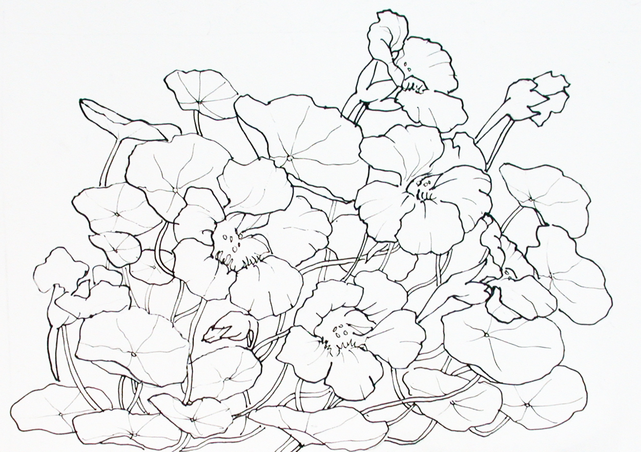 Nasturtiumsoranges yellows and greenswinding tendrils and a i like the drawing as it has solid lines and these flowers would be so good for an art nouveau sort of treatment with lots of black lines izmirmasajfo
