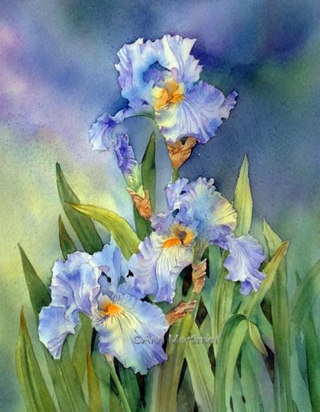 Blue Irises