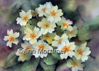 Spring primroses