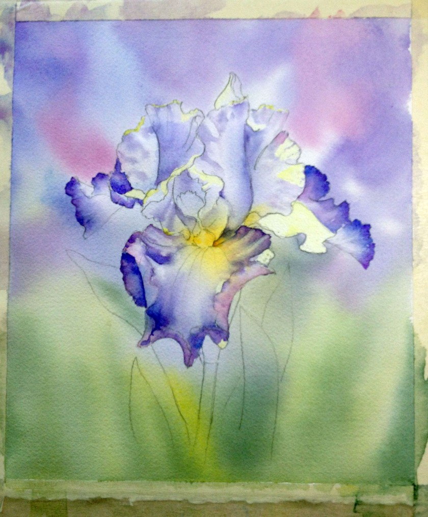 blue-and-white-iris-st-3