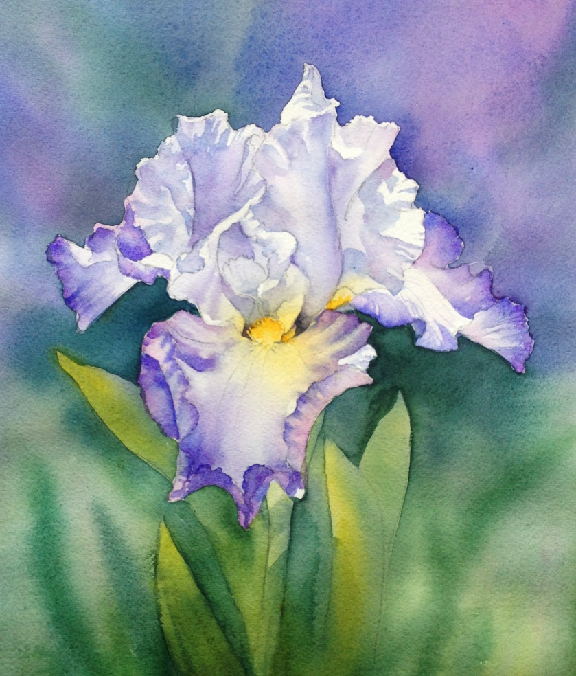 blue-and-white-iris-st-5