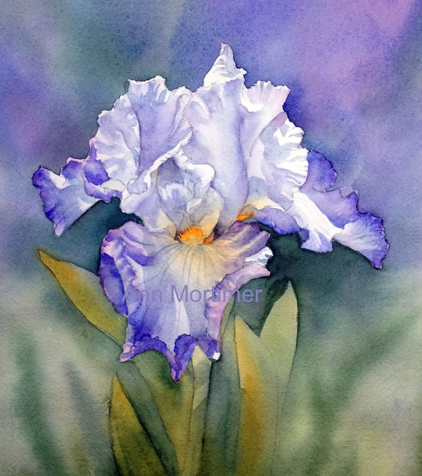 copy-blue-and-white-iris