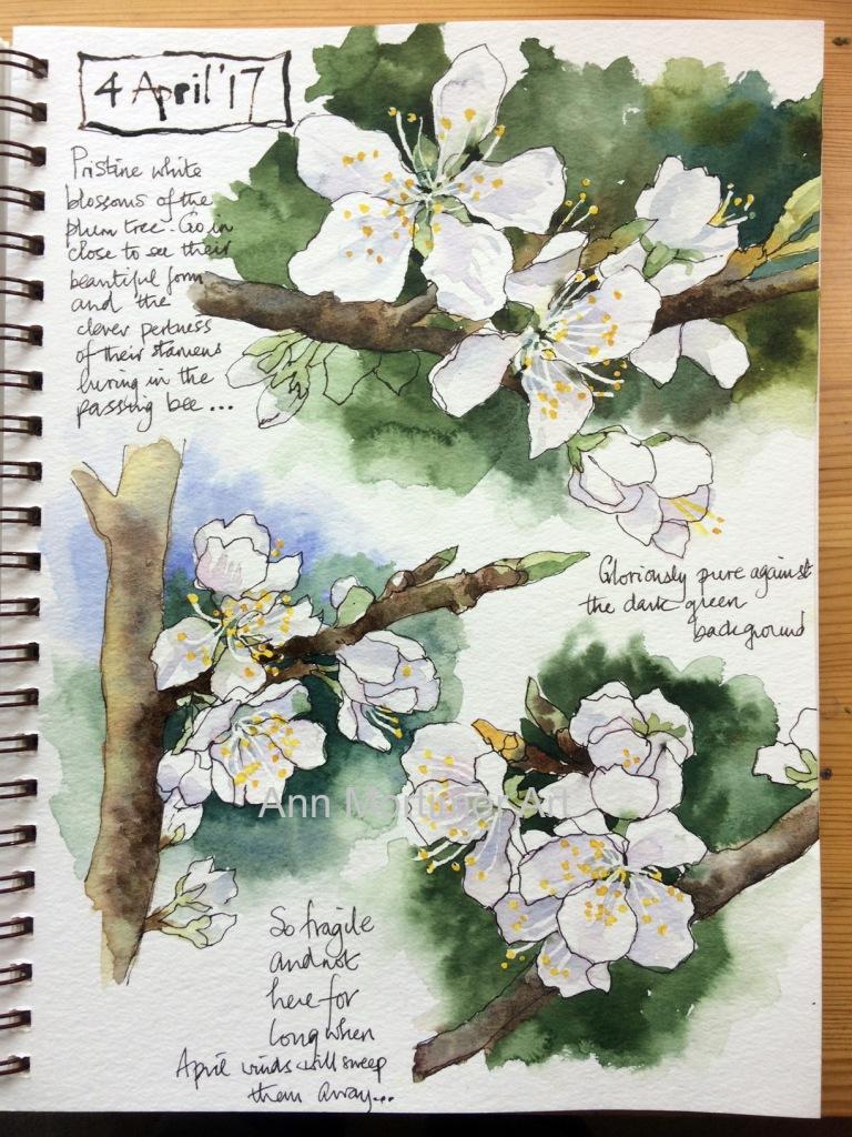 copy plum blossom sketch