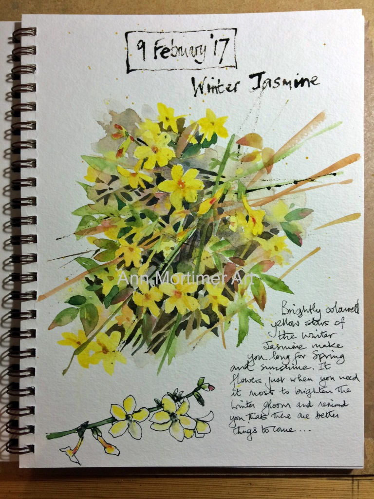 copy winter jasmine sketch