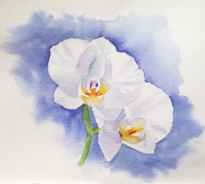 orchid shadows