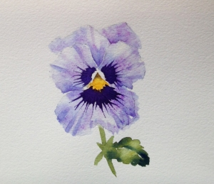 pansy markings