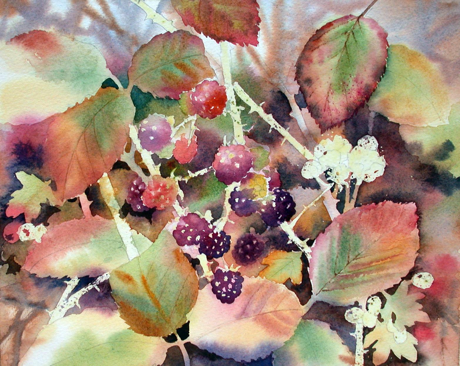 blackberries stage 4