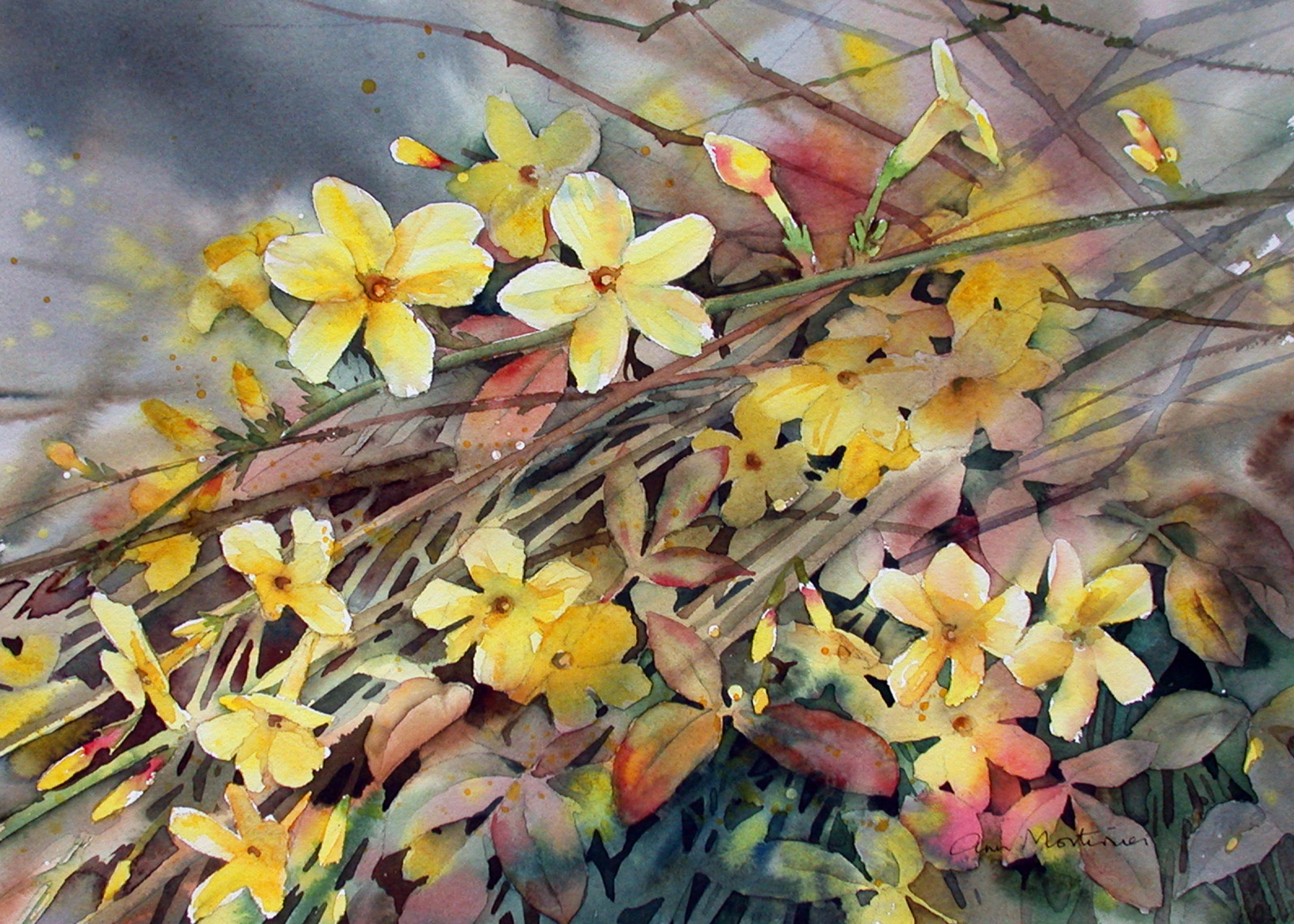 adj winter jasmine small